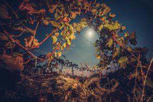 ワインを美味しくするのも、飲むタイミングも、月の星座次第!?