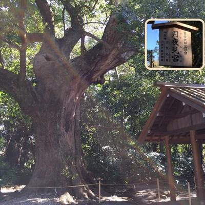 日々の感謝・自然の力を改めて感じる「お伊勢参り」、125ある宮社の中から月読宮へ。