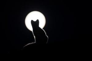 本日上弦の月、感情を溜め込んでしまうときは、涙を流してストレス解消!!