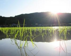 稲穂の国 日本と月の密接なかかわり ~命への敬意と感謝の気持ちを知ること~