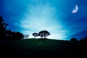 今日は上弦の半月。ここから1週間、月のエネルギーを受け取る為に意識したいのはたった一つ!