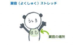 肩甲骨のストレッチ~翼宿<br>【宿曜ストレッチ】