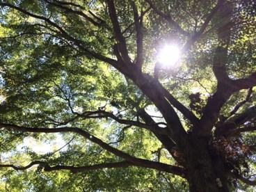 都会に住むあなたへ 「一日一自然」で健康を取り戻す!