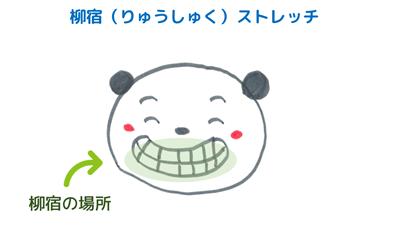 歯のストレッチ~柳宿<br>【宿曜ストレッチ】