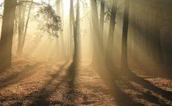 『深まる秋は油断大敵!今日の月よみ足裏セルフケア』
