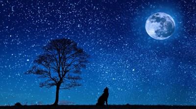 【月星座別】インナーチャイルドを癒す方法<br>~おとめ座編~