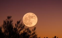 【月星座別】インナーチャイルドを癒す方法~おひつじ座編~