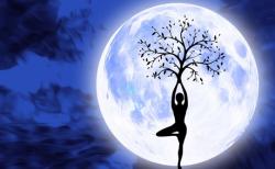上弦の月の今日は肺と肝! 月の満ち欠けを利用した効果的な身体ケア