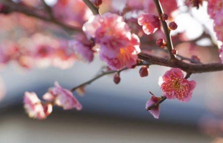 雪解けのように血液も流れ始める春スタート!