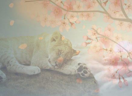 月星座にまつわるココロとカラダのちょっといい話 獅子座編