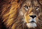 あなたの内なるLeoの扉(ライオンズゲート)を開くために、8/8しし座新月までにするべきこと
