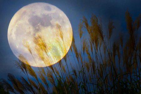 今年の『中秋の名月』は9/21 ちょっと贅沢にお月見を楽しもう!
