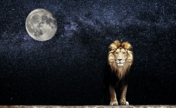 根を張り、内なる獅子が目醒める。「月リズム・バランスコンディショニング」 グランディング編