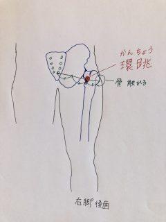 【宿曜】月のエネルギーを受けやすい部位を利用した身体ケア ~危宿(きしゅく)・婁宿(ろうしゅく)・胃宿(いしゅく)~