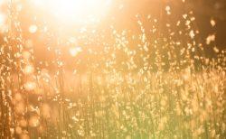 宇宙のエネルギーと繋がり、秋分からをエネルギッシュに過ごすには